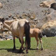 Charang at Upper Mustang Trekking