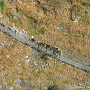 On the way to Jomson at Ghorepani Poon Hill Trekking