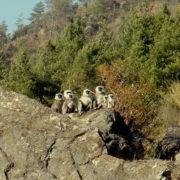 Tamang Heritage Trekking