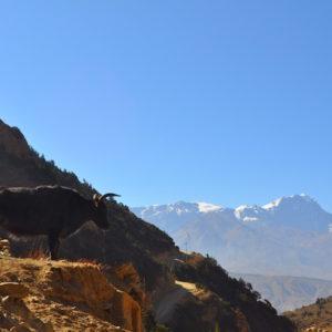 Syangboche at Upper Mustang Trekking