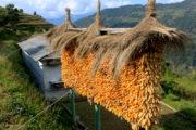 Typical Home at Nangi
