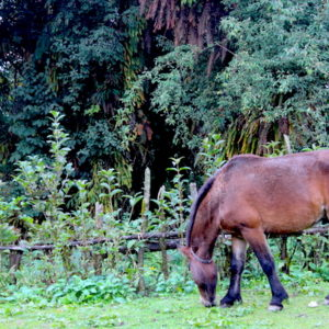Grazing Horse on the way to Mardi
