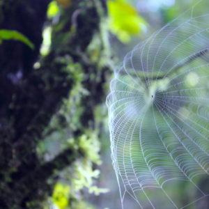 Spider Web on Mardi Trekking