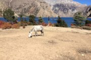 Trek to Nepal Dolpo Region