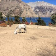 Trek to Nepal Dolpo Region