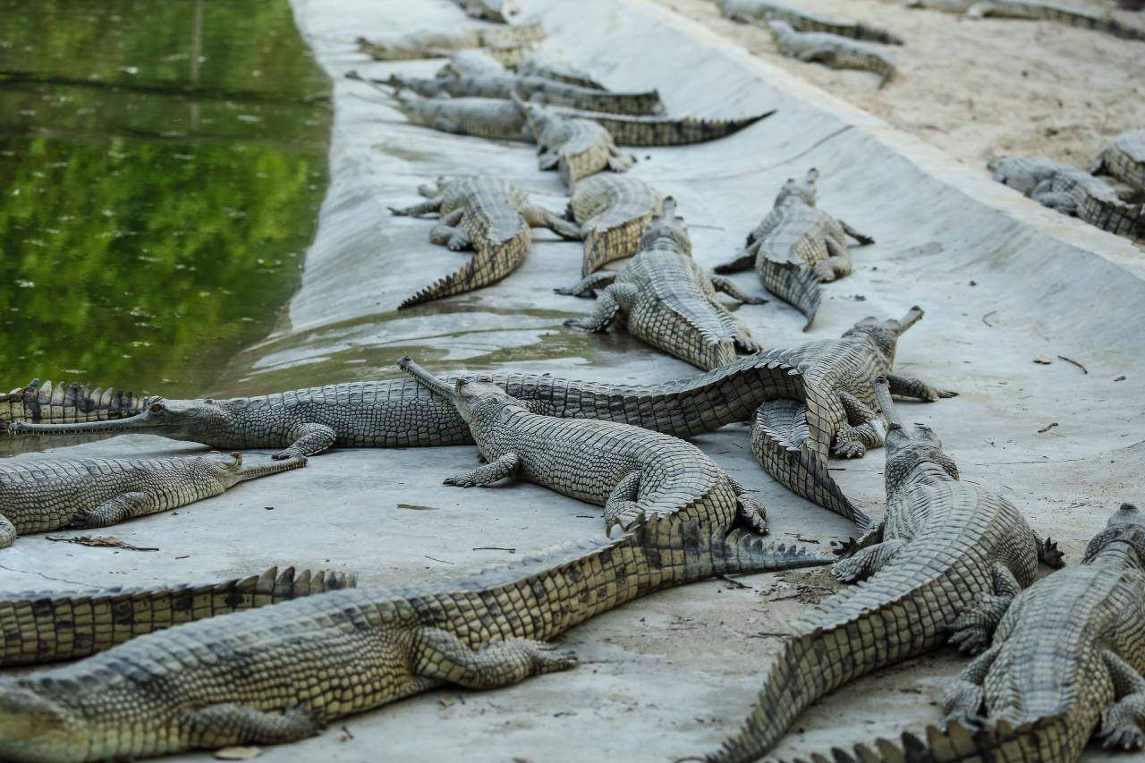 Crocodile Breeding Center Nepal