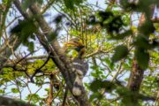 Bird sighting at Chitwan