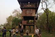 Tower Stay at Chitwan